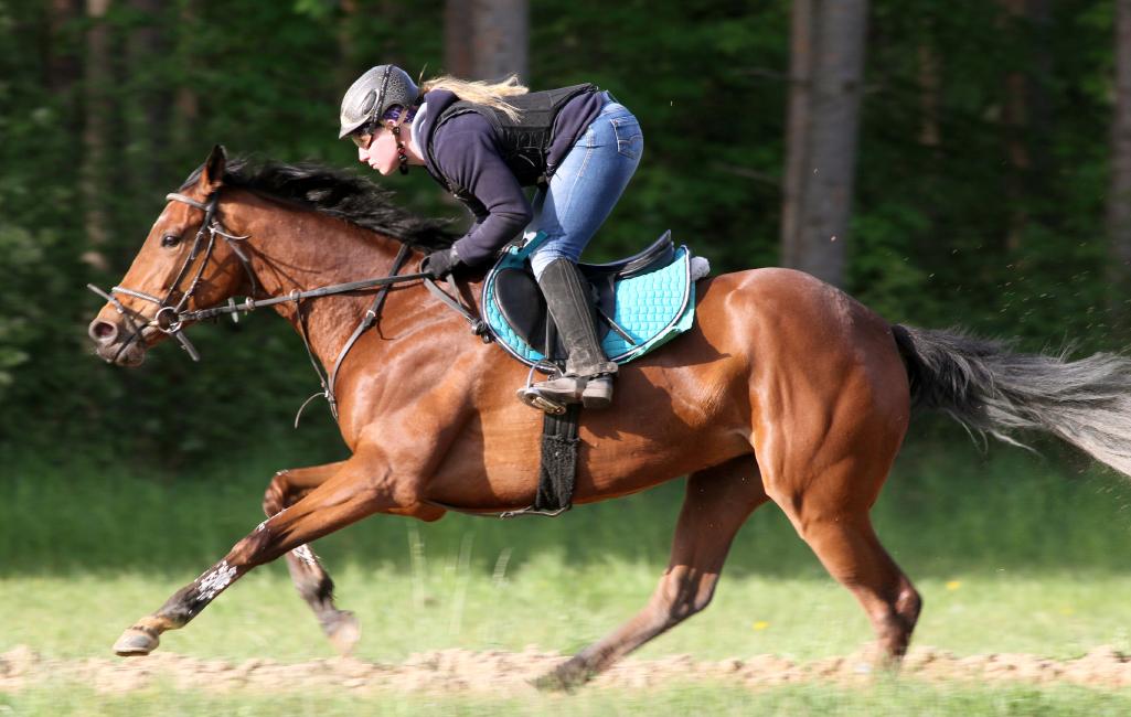 rennstall-uwe-stech-pferdetraining